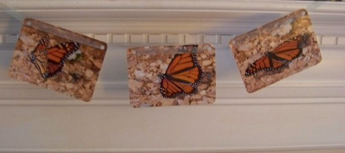 Three 5x7 Butterfly Photos turned into a mantlepiece decoration