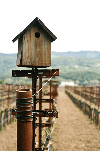 Birdhouse and lines of vines