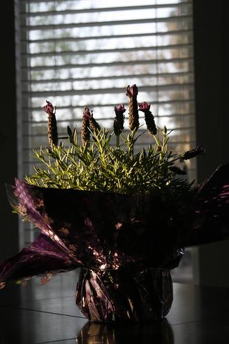118:365,lavender morning