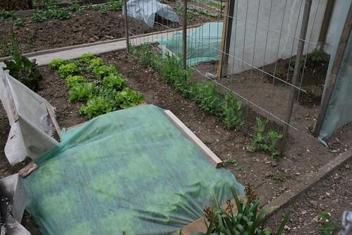 basel garden 032