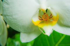 Orchidaceae (YBowyer Photography) Tags: sf sanfrancisco california ca camera canon photography rebel photo bayarea amature san xti canonrebelxti canonxticanonrebel