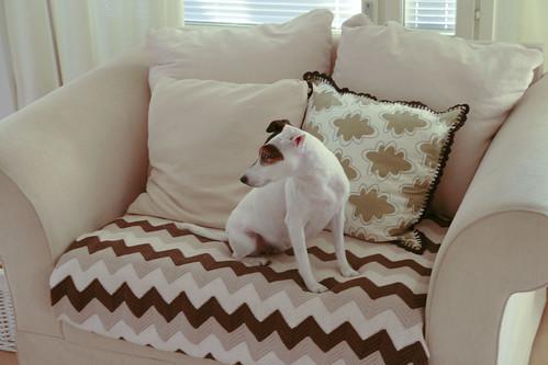 Papu sohvalla