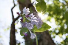 purplesunshine