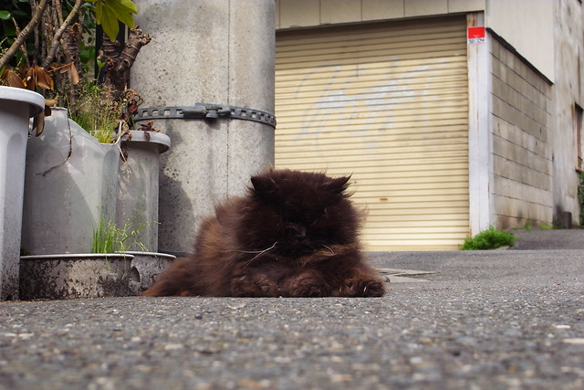 Today's Cat@2011-05-08