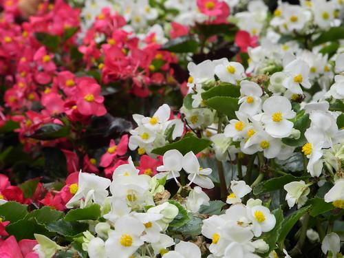 Flowers - Ta An Park