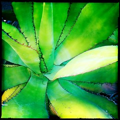 Vail Aloe by Jason Willis