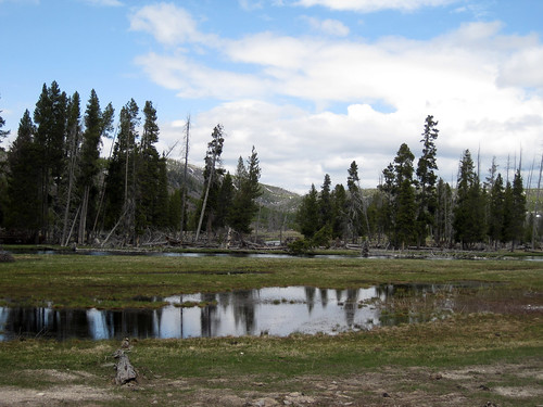 Hayden Valley, Yellowstone National Park, Wyoming.