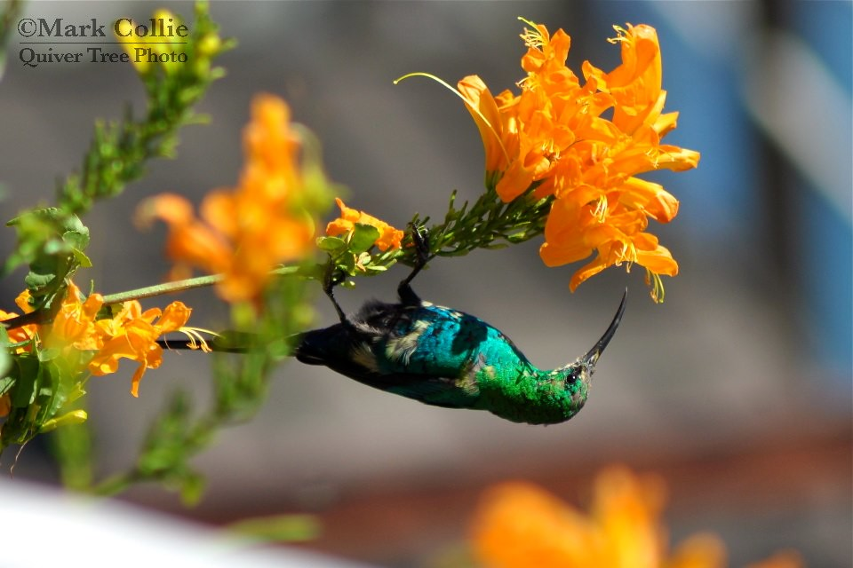 Travelling Tuesday: Flowers and Sunbirds