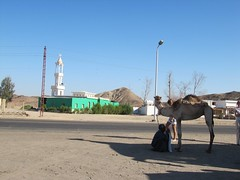 Mosque. And Camel.