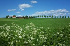 Sommer i Nannestad #2 (Krogen) Tags: summer june norway juni landscape norge sommer 110 norwegen noruega scandinavia akershus romerike krogen landskap noorwegen noreg skandinavia nannestad fujifilmx100