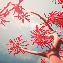 Flowers of love 3 (JAG_50D) Tags: barcelona flowers autumn light summer sky españa naturaleza flores love sol nature colors azul clouds spring spain europa europe bcn natura catalonia cielo verano catalunya gettyimagesiberiaq2