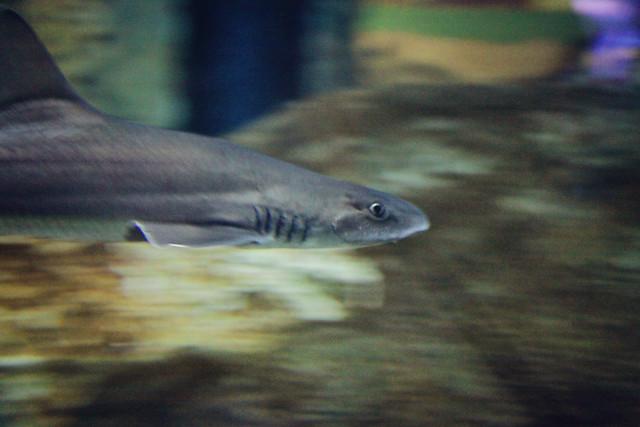 MODS shark tank