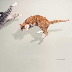 141 of 365 (Morphicx) Tags: storm cat canon5d 365 canon2470f28l morphicx keistorm keidutchforrockorboulder 365shotsin365days