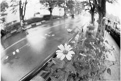 A flower on rainy day.