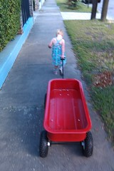 maybelle pulling the wagon
