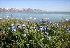 Цветистая Чукотка 7 (Магадан) Tags: anadyr chukotka анадырь чукотка чукчи луораветланы luoravetlan