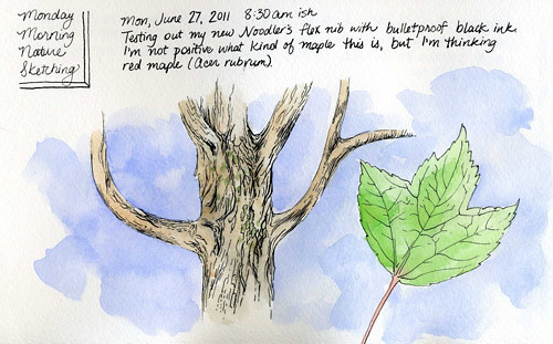 6-27-2011, Red Maple