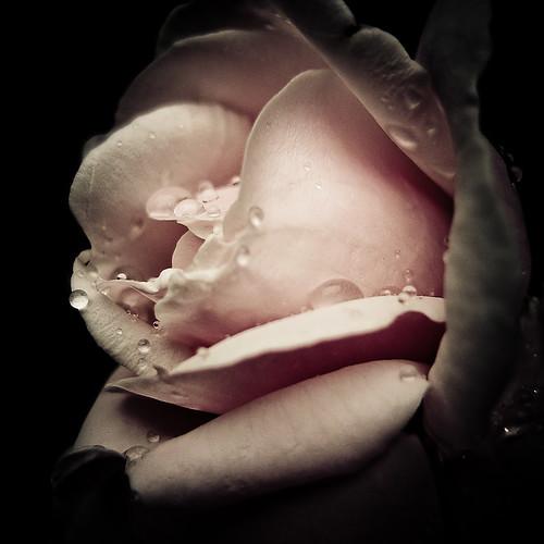 _rosé