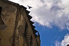 Pigeon and Sky (Cristiano Drago) Tags: sky clouds canon nuvole pigeon cielo sicily palermo sicilia blondegirl colomba 650d ilobsterit cristianodrago