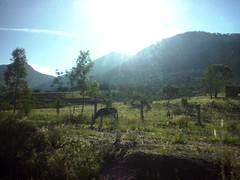 Mi Tierra (mayavilla) Tags: mitierra viaje nomaldad feliz simple vida soar burrito campo amanecer desdelaventanilladelautobus desdeelautobus desdelaventanilla carretera guanajuato burro