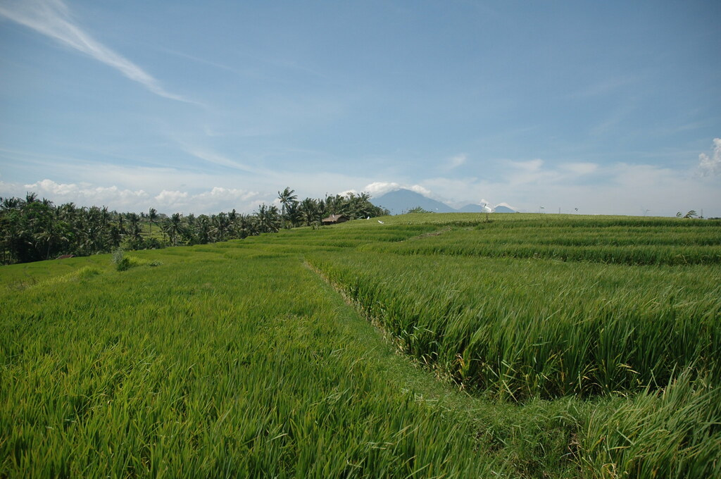 Fields and volcanoes, Balian beach, Bali