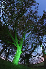 Glowing tree (LukePhotoFace) Tags: longexposure lightpainting colours wideangle fisheye 65mm opteka torchpainting