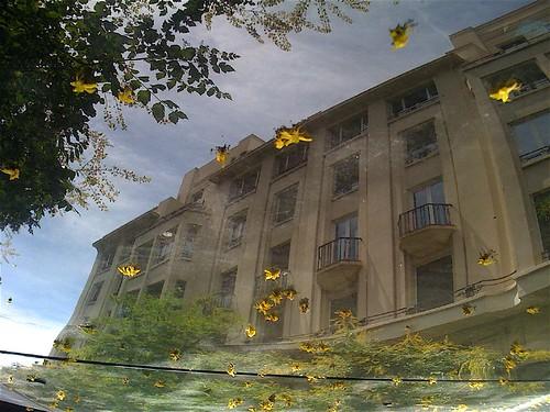 Ca�da de flores amarillas by JoseAngelGarciaLanda