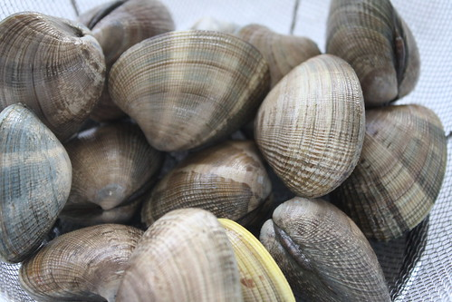 Grilled Clams
