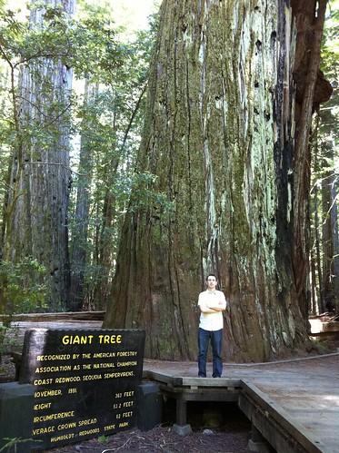 Giant Tree