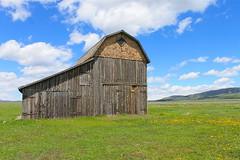 Antelope Flats Road, Grand Teton National Park (rosinberg) Tags: mountains west yellow nationalpark barns wildflowers wyoming grandtetons grandtetonnationalpark mormonrow antelopeflatsroad