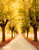 Viale d'autunno (gred.) Tags: autumn trees red tree colors yellow mood path fallcolors thesecretlifeoftrees