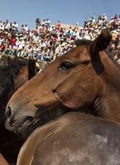 Mirada Sabucedo (David Calvelo) Tags: caballos galicia curro sabucedo rapadasbestas aloitadores laestrada canon7d davidcalvelo