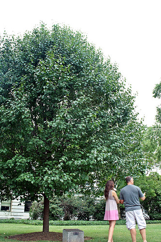 "GreenXC cofounder Polina Raygorodskaya gets a tour of the USDA Whitten Bldg ""tree library"" while visiting Washington, DC before her cross country odyssey begins July 27, 2011. Photo courtesy of Igor Bratnikov, a co-founder of GreenXC.GreenXC cofounder Polina Raygorodskaya gets a tour of the USDA Whitten Bldg ""tree library"" while visiting Washington, DC before her cross country odyssey begins July 27, 2011. Photo courtesy of Igor Bratnikov, a co-founder of GreenXC."