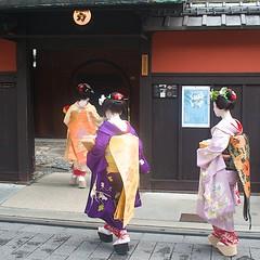 Maiko into the Ochaya, Kyoto. (pgpicture) Tags: japan kyoto maiko gion okobo