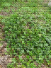ground cover (William Keckler) Tags: green art digital spring stream lego abstractart digitalart pixelart abstraction pixels streaming legoart digitallandscape digiscape springlandscape digitalstream legograph