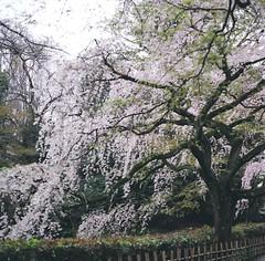 94700001 (Darjeeling_Days) Tags: hasselblad 京都 中判 プロビア