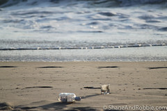 20091115-IMG_1515-3121.jpg (ShaneAndRobbie) Tags: australia newsouthwales kingscliff