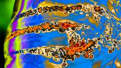 Aurelia aurita in magical light (seyf\ART) Tags: lightroom animal aurelia macro colorful quallen