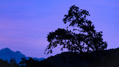 Star of the Evening (Capturing desire) Tags: nikon nikond5300 travel night evening sky skyscape jaipur star venus birds trees hills blue bluehour beautiful bliss outdoor twilight sunset hues frame