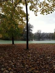 Alexander  Park .  Pushkin. St.Peterburg . (presteza777) Tags: park alexanderpark autumn automne autunno trees    stpetersburg russia