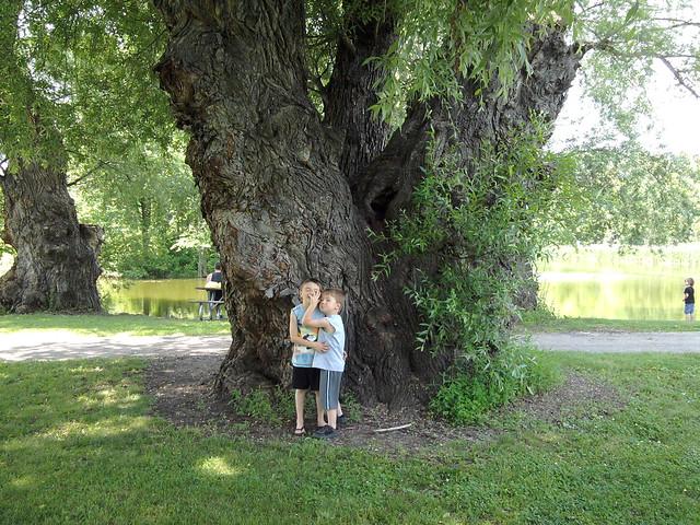 The boys & the big tree (#1)
