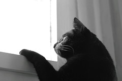 Looking for freedom :) (Thomas Pannier) Tags: blackandwhite window cat blackcat freedom fenster bestshot freiheit schwarzekatze schwarzweis bestimage bestesbild bestesfoto