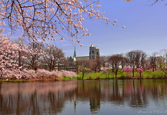 Reflection of the spring (NataThe3) Tags: park flowers sky lake reflection tree nature spring cathedralbasilicaofthesacredheart topshots worldwidelandscapes panoramafotogrfico theoriginalgoldseal