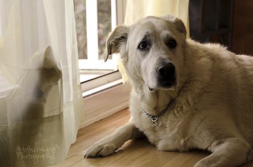 狗遇见猫,第三幕