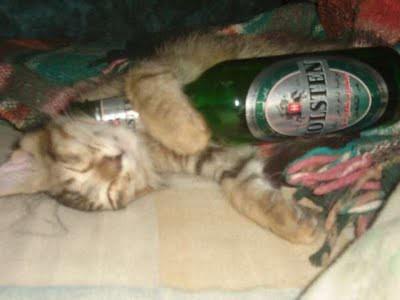 cat_birthday_parties_23