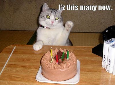 cat_birthday_parties_12