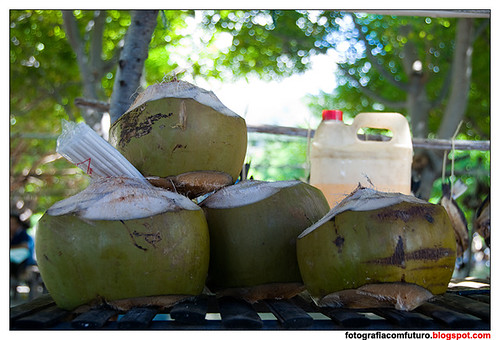 Cocos by FOTOGRAFIA com FUTURO