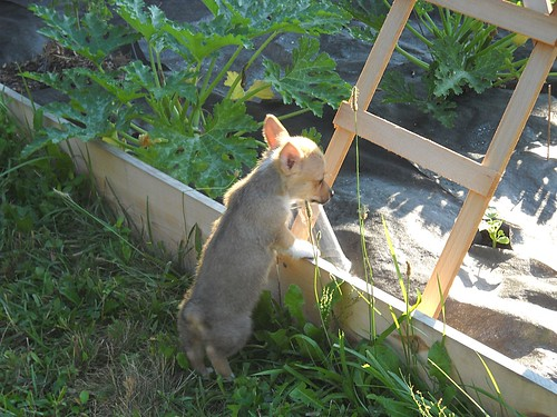 Maggie discovers the vegetable garden