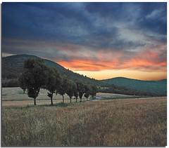 In a row (Nespyxel) Tags: sunset france landscape tramonto provence francia provenza nespyxel stefanoscarselli fleursetpaysages
