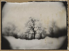 coffeetree (NooFZz) Tags: bw tree landscape monocle 9x12 photographicpaper paperpositive bulldog4x5